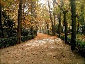 Autumn in Retiro Park