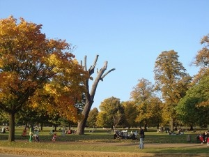 Hyde Park - London - 16