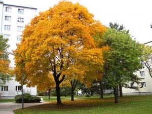 Autumn in Vienna by Wien-Vienna