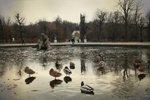 winter morning at Schönbrunn by tracX