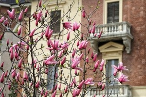 Spring by Italy Chronicles Photos