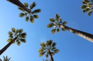 Palms by Julia Folsom